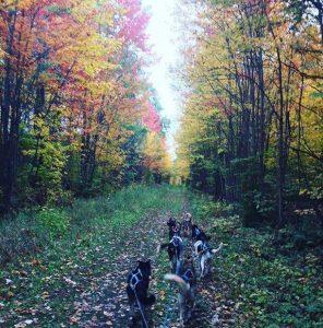Extended Fall Dog Sledding Adventure