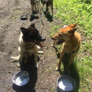 Lead Dogs Talking