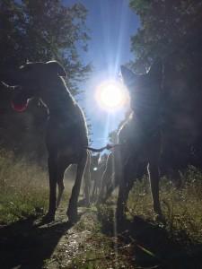 Morning Dog Sled Tour