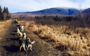 Rolling Dog Sled Ride In March