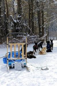Traditional Dog Sled Setup
