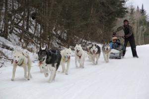 Wes Winter Dog Sledding