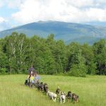 rolling-dog-sled-ride-with-presidential-mountain-range-view