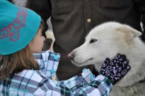 Child Petting Sled Dog