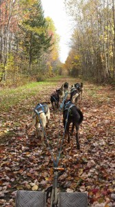 Fall Rolling Dog Sled Ride (1)