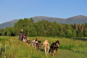 Summer Rolling Dog Sled Ride