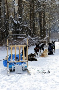 Traditional Dog Sled Setup